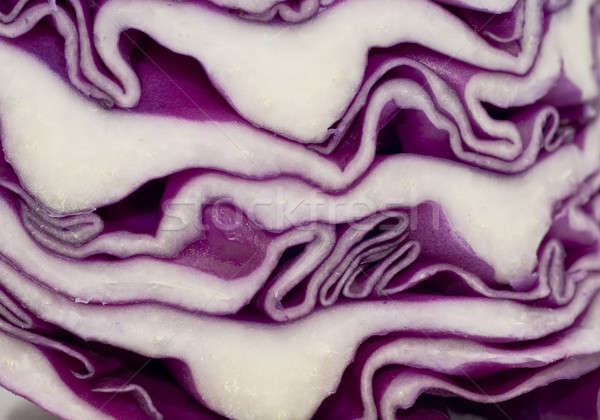 Cabbage - extreme closeup Stock photo © Arsgera