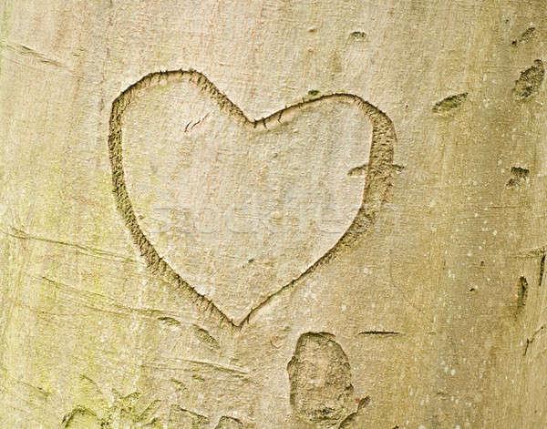 Heart shape on tree bark Stock photo © Arsgera