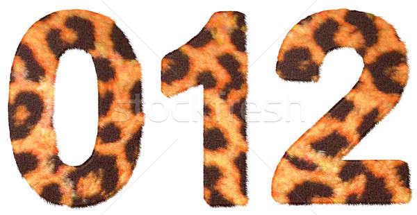 Leopard pelle pari a zero isolato bianco moda Foto d'archivio © Arsgera