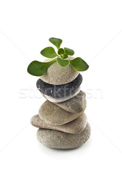 Születés élet kiegyensúlyozott kő torony növény Stock fotó © Arsgera