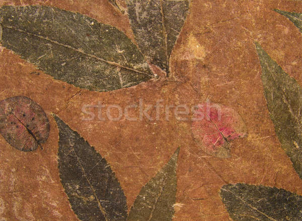 Aged handmade brown paper texture with leaves herbarium Stock photo © Arsgera
