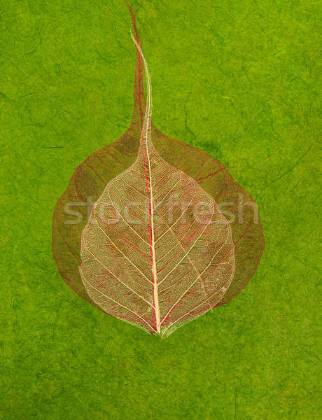 Green handmade asian paper with leaves Stock photo © Arsgera