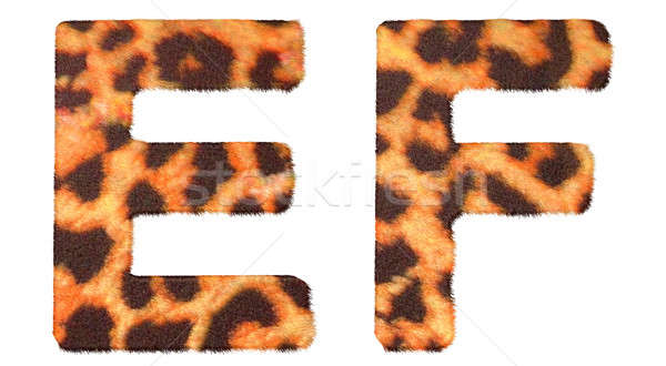 Stock photo: Leopard fur E and F letters isolated