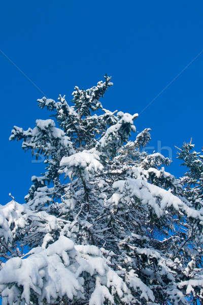 Winter - snowy firtree Stock photo © Arsgera