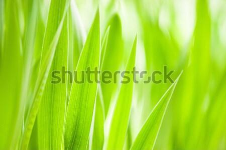 Printemps herbe verte utile environnement modèle Photo stock © Arsgera
