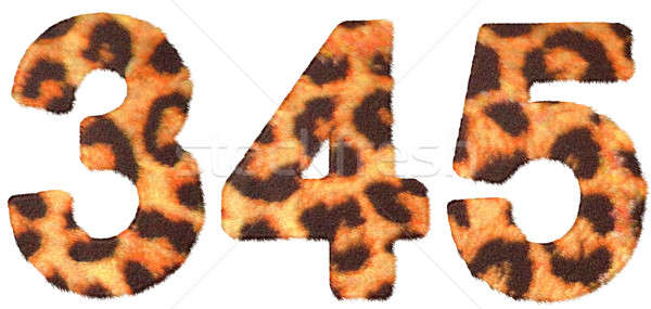 Leopard skin 3 4 and 5 figures isolated Stock photo © Arsgera