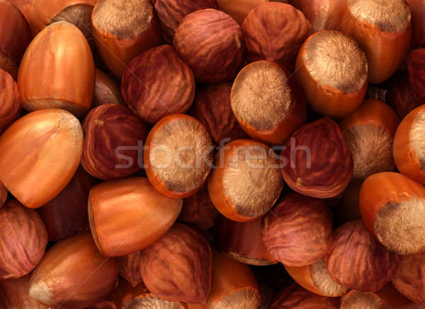 Hazel nuts and filbert texture Stock photo © Arsgera