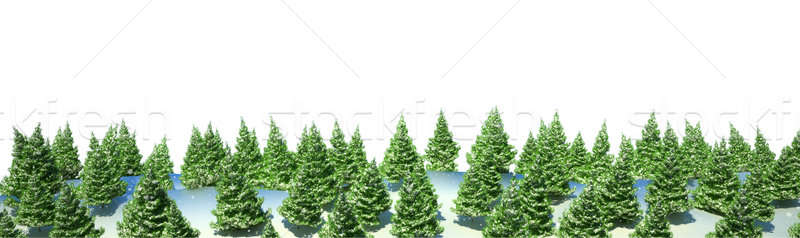 Firtree forest landscape isolated Stock photo © Arsgera
