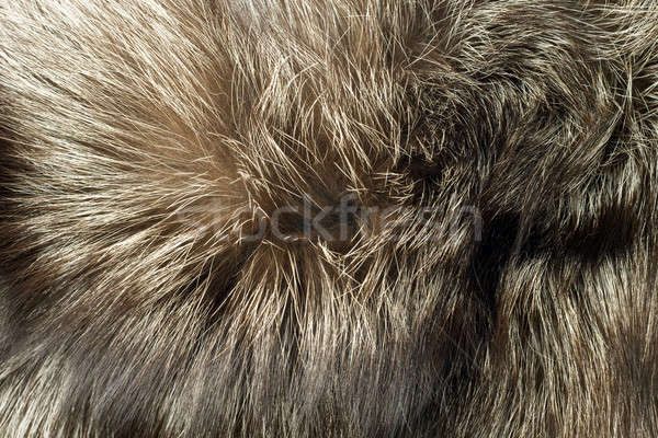Fox fur Useful as background Stock photo © Arsgera