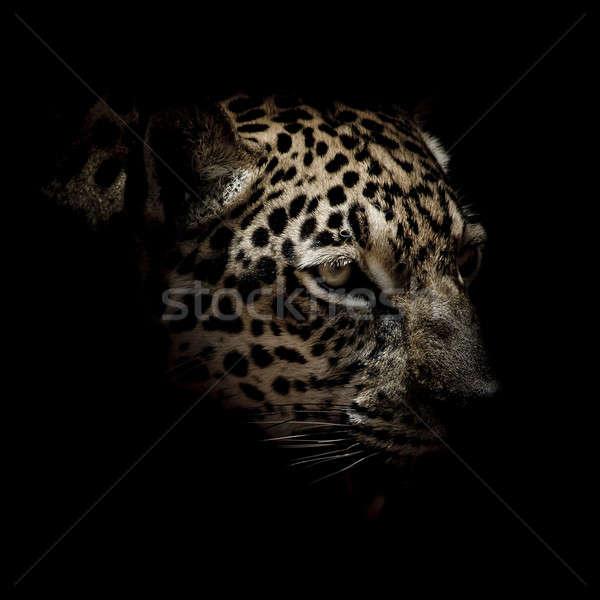 Jaguar portre göz doğa arka plan kaplan Stok fotoğraf © art9858