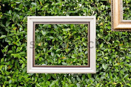 white color hanging photo frame isolated on green leaves Stock photo © art9858