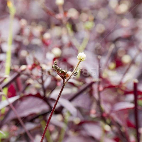 çiçekli soğan gıda doğa bahçe sebze Stok fotoğraf © art9858