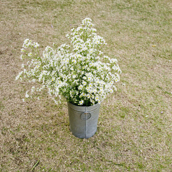Vintage style White flowers stainless pot on dry grass backgroun Stock photo © art9858