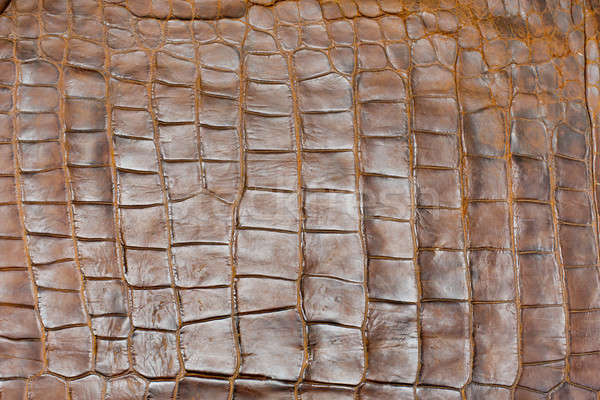 Tint Golden Crocodile Skin Texture, closeup Stock photo © art9858