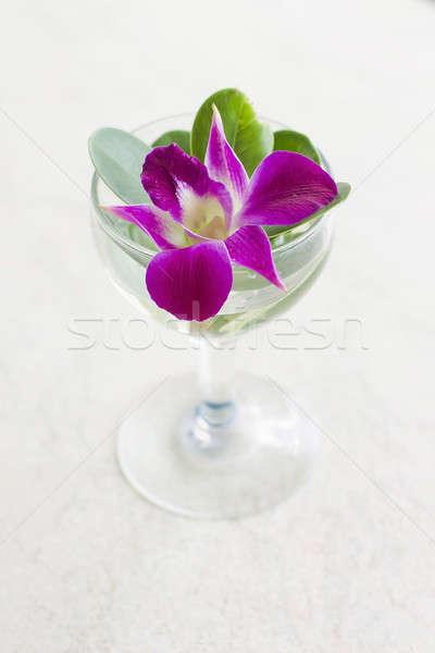 Orchidee bloem geïsoleerd witte plant schone Stockfoto © art9858