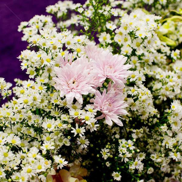 Belo flor-de-rosa decoração primavera natureza Foto stock © art9858