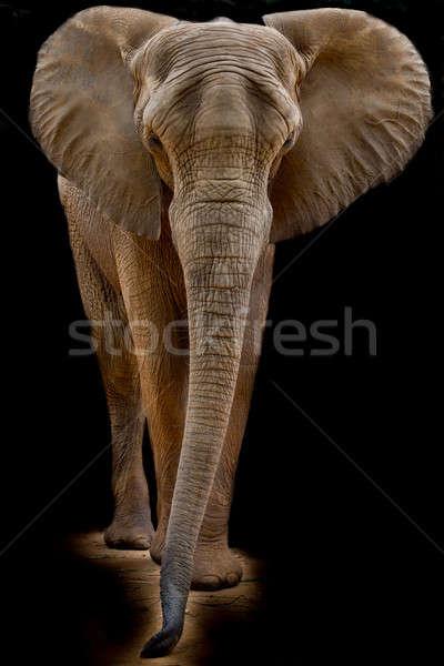 Imagine de stoc: Elefant · african · natură · călători · elefant · african · turist