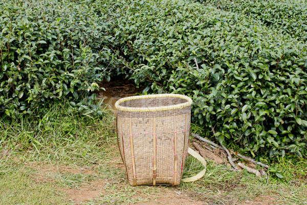 ストックフォト: 緑茶 · フィールド · 葉 · ファーム · 作業 · ドリンク