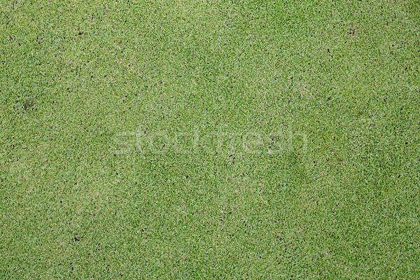 Groen gras textuur veld gras zomer Stockfoto © art9858