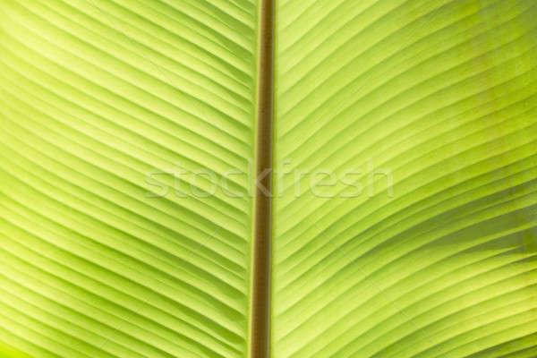 極端な クローズアップ 新鮮な 緑色の葉 テクスチャ 自然 ストックフォト © art9858