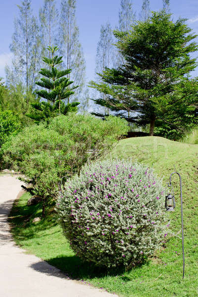 Jardim arbusto primavera floresta casa fundo Foto stock © art9858