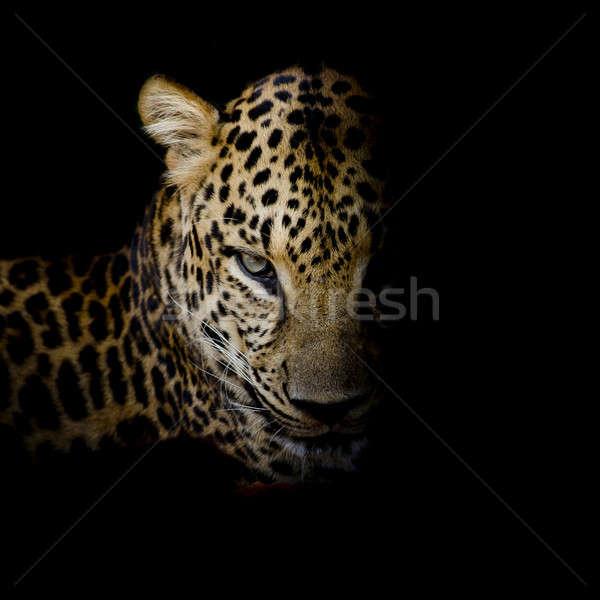 Leopard ritratto nero occhi Foto d'archivio © art9858