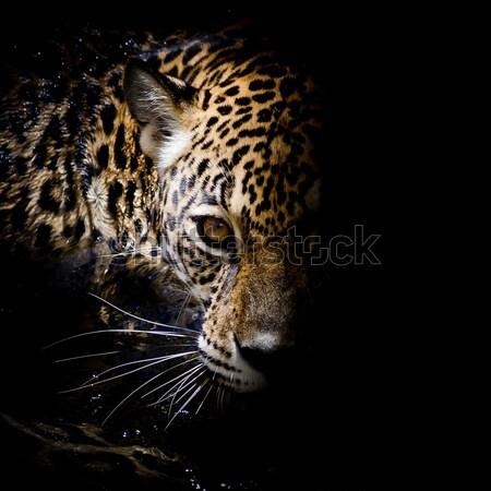 Leopardo retrato cara gato parque animal Foto stock © art9858