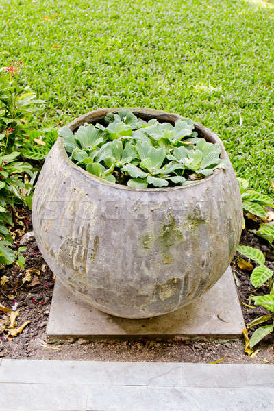 Klein planten water jar tuin Stockfoto © art9858