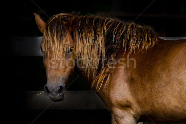 Cheval oeil fond animaux course Japon Photo stock © art9858