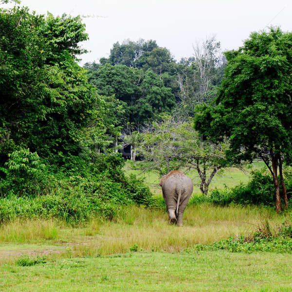 elephant is backing to the sparse forest Stock photo © art9858