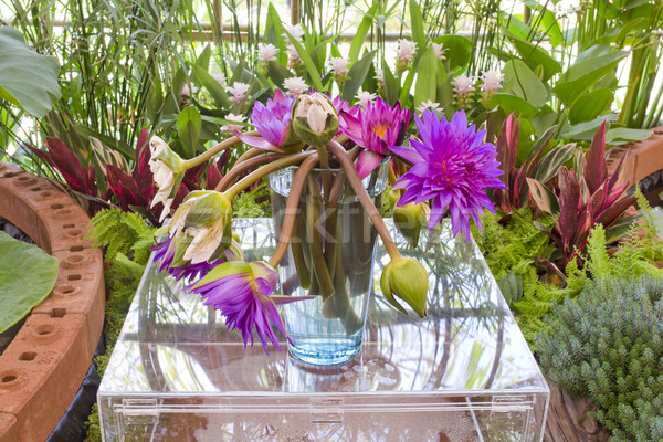 Floristry Pink and purple lotus flowers in glass vase. Stock photo © art9858