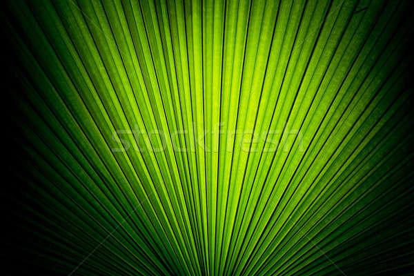 Bella foglie di palma albero luce del sole texture natura Foto d'archivio © art9858