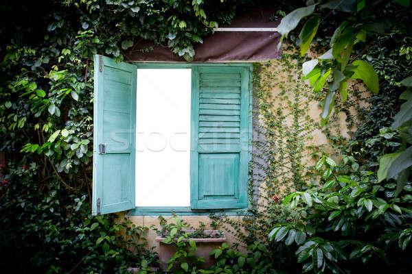 Folhas verdes parede verde janela jardim natureza Foto stock © art9858