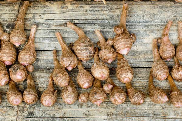 Group of taro roots Stock photo © art9858