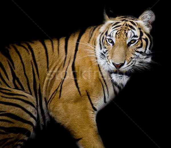 Stock fotó: Tigris · zöld · fej · dzsungel · mérges · düh