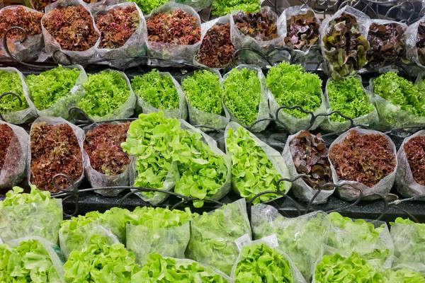 Friss áruház étel természet zöld saláta Stock fotó © art9858