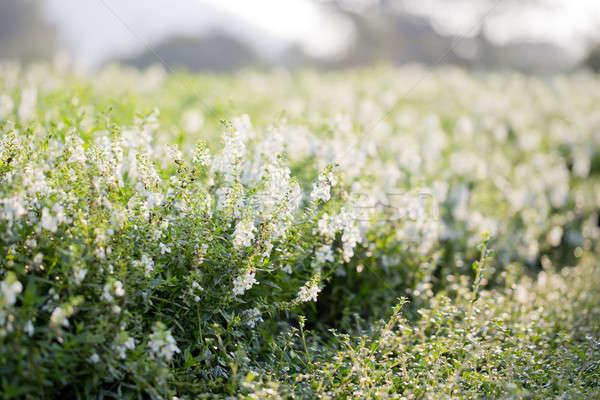 Fehér virágok virág esküvő szeretet szépség zöld Stock fotó © art9858