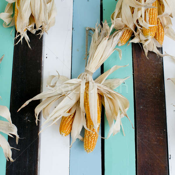 Dried corns is hanged on the roof Stock photo © art9858