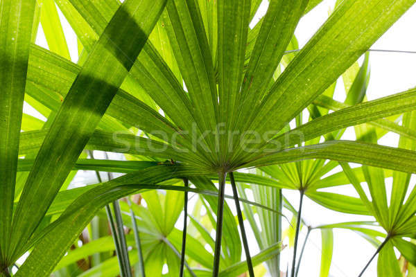 Green leave, leaft background texture Stock photo © art9858