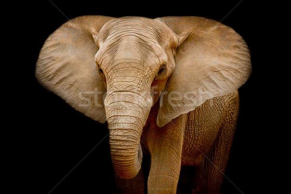 слон текстуры природы портрет черный голову Сток-фото © art9858