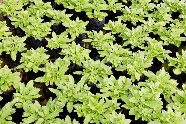 молодые растений растущий завода питомник свет Сток-фото © art9858
