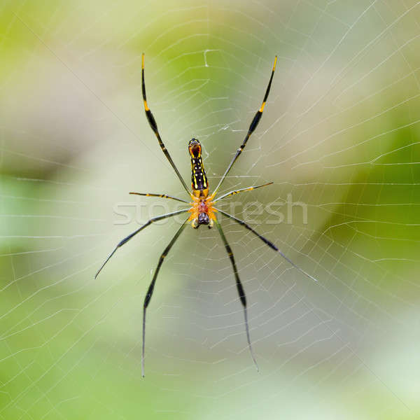 Spider on the web. Stock photo © art9858