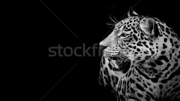 ストックフォト: ジャガー · 肖像 · 自然 · 芸術 · アフリカ