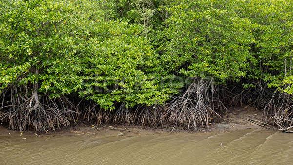 Stock fotó: Erdő · víz · tavasz · folyó · növény · park
