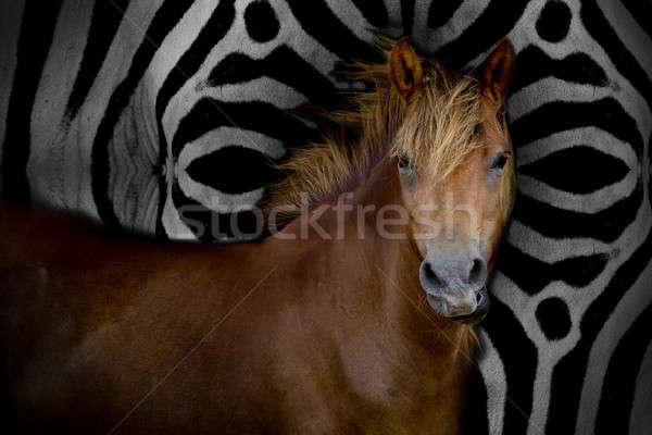 Caballo formación animales carreras de caballos Japón Foto stock © art9858
