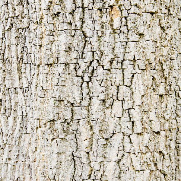 Old Wood. Seamless Tileable Texture. Stock photo © art9858