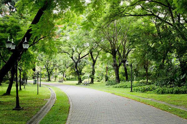 Kő ösvény zöld park égbolt tavasz Stock fotó © art9858