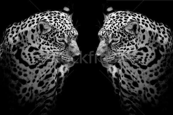 Közelkép jaguár portré természet művészet Afrika Stock fotó © art9858