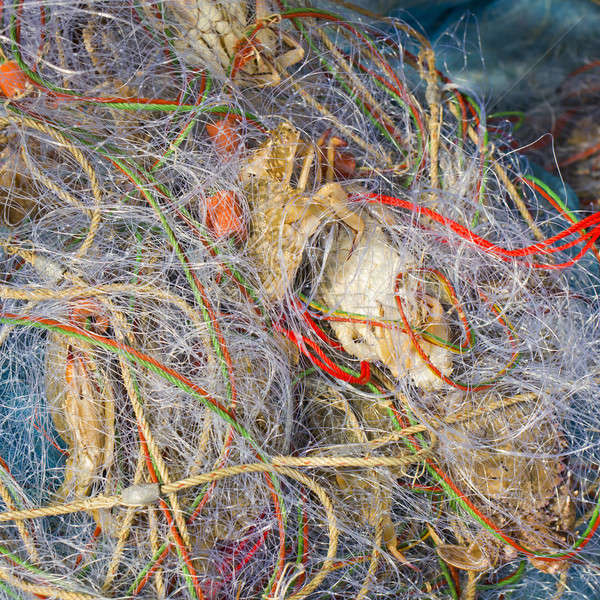 Blue crabs in fishnet Stock photo © art9858