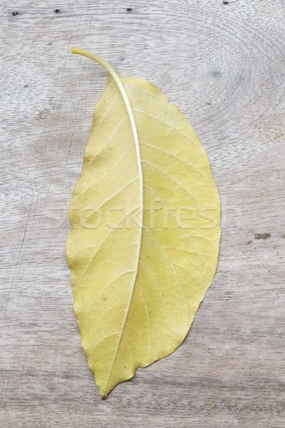 beautiful yellow leaf on wood background Stock photo © art9858
